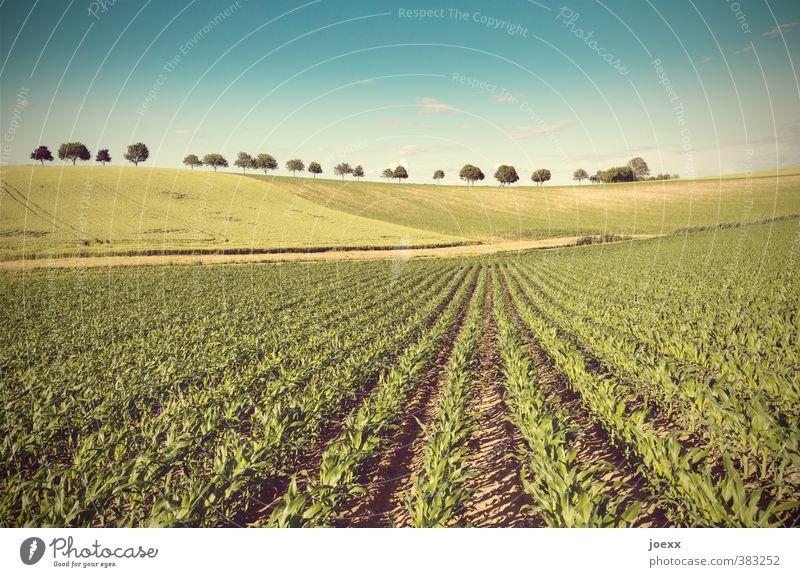 Linien Landschaft Pflanze Erde Himmel Wolken Horizont Schönes Wetter Baum Nutzpflanze Feld Hügel groß blau braun gelb grün gewissenhaft ruhig Idylle Kultur