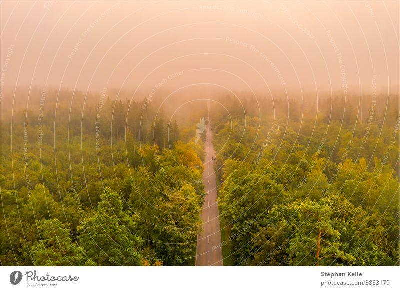 Nebliger Sonnenaufgang. Luftaufnahme einer Straße quer durch den Wald an einem sehr nebligen Morgen, aufgenommen von einer Drohne. Stimmung glühen Staubwischen