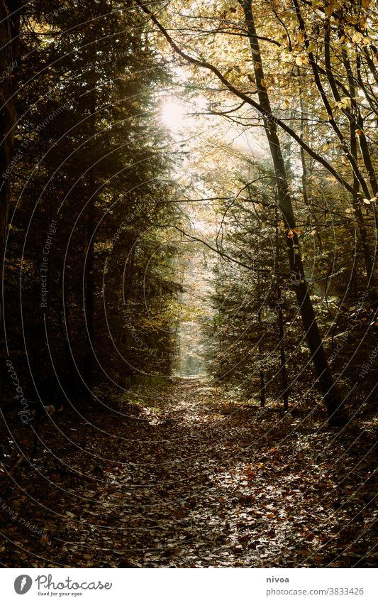 Waldspaziergang im Herbst herbstlich Stimmung Licht Wege & Pfade Spaziergang Baum Farbfoto Außenaufnahme Tag Umwelt Blatt Herbstlaub Natur Fußweg Pflanze