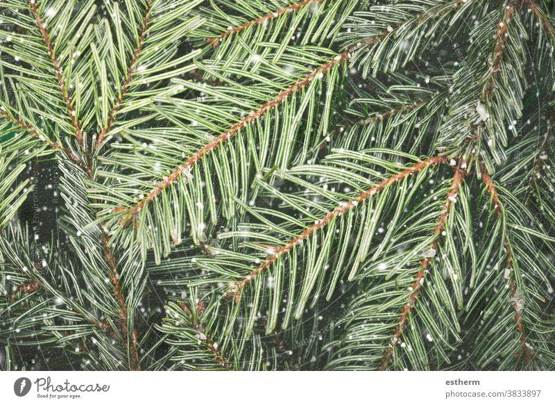 Nahaufnahme von Weihnachtsbaumzweigen mit Schneeflocken Weihnachten Hintergrund Heiligabend Textfreiraum Feier abstrakt Frohe Weihnachten copyspace Totenkranz
