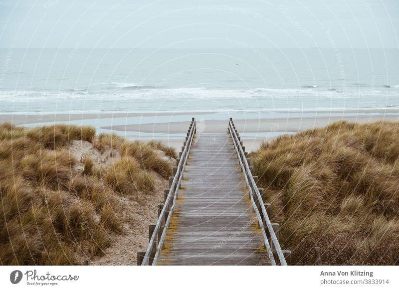 Nordseestrand Meer Strand Dünengras Herbstwetter Raues Meer Meereslandschaft Holland Belgien Urlaub Küste Holzsteg Ferien & Urlaub & Reisen Natur Außenaufnahme