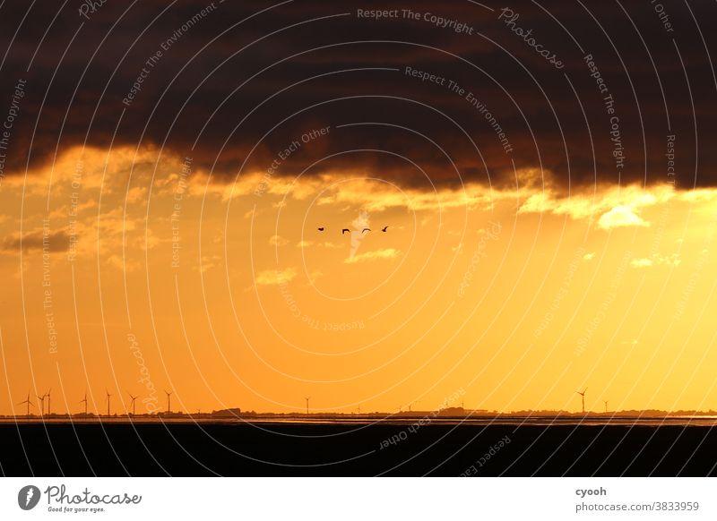 Reise Zugvögel Zugvogel Gänsevögel Gans Nordsee Ostfriesland Ostfriesische Inseln Wattenmeer Ebbe Windrad Sonnenuntergang Sonnenaufgang gold gelb orange