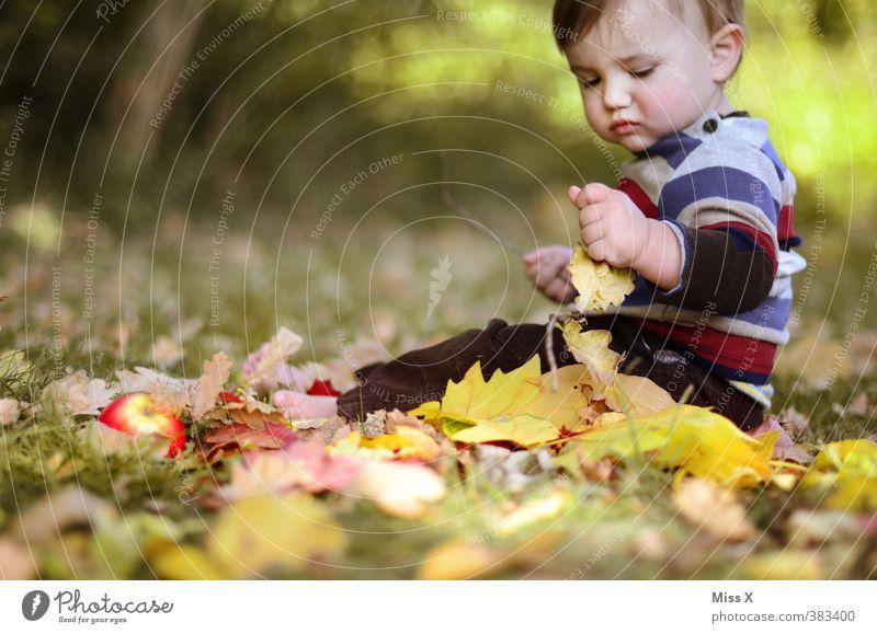 Bald kommt der Herbst Mensch Kind Blatt Herbst Gras Spielen Stimmung Kindheit sitzen Zufriedenheit Baby Fröhlichkeit niedlich Apfel Kleinkind Herbstlaub