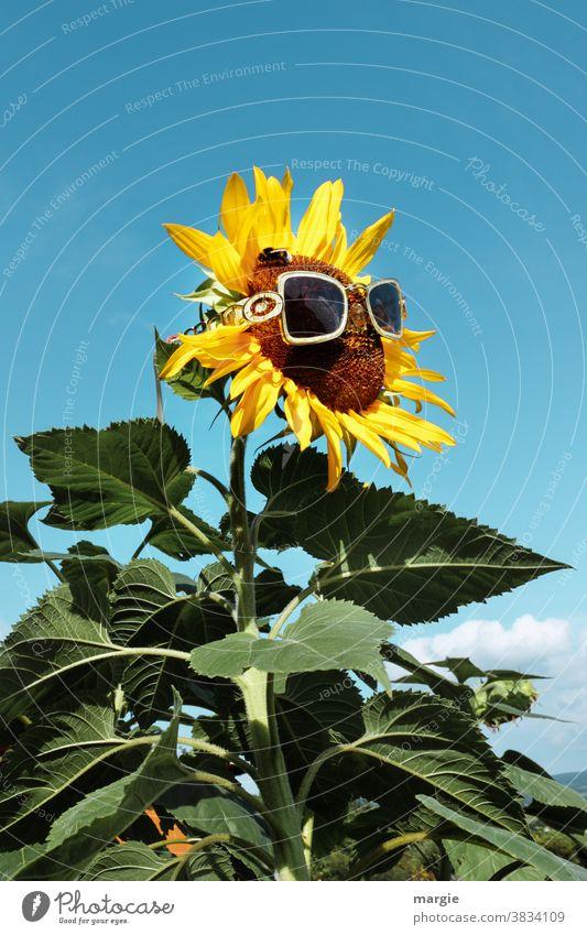 !Trash! 2020 |Ausblick auf ein sonniges Jahr 2021 Sonnenblume gelb Pflanze Sommer Nahaufnahme Blatt Außenaufnahme Garten Natur Blüte Blühend Menschenleer grün