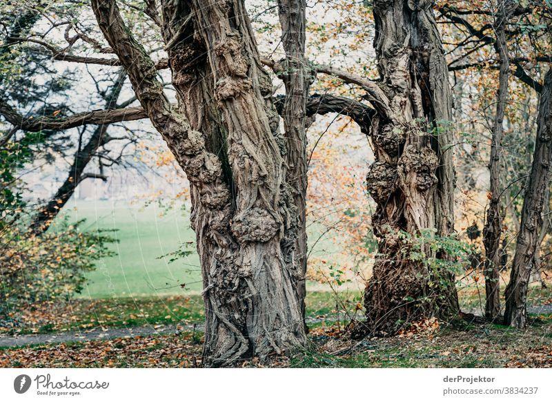 Bäume im Herbst in Bad Nenndorf Landschaft Ausflug Natur Wanderung Umwelt wandern Pflanze Baum Wald Akzeptanz Vertrauen Glaube Naturerlebnis herbstlich