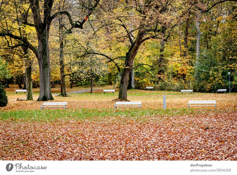 Freie Bänke im Herbst in Bad Nenndorf Landschaft Ausflug Natur Wanderung Umwelt wandern Pflanze Baum Wald Akzeptanz Vertrauen Glaube Naturerlebnis herbstlich