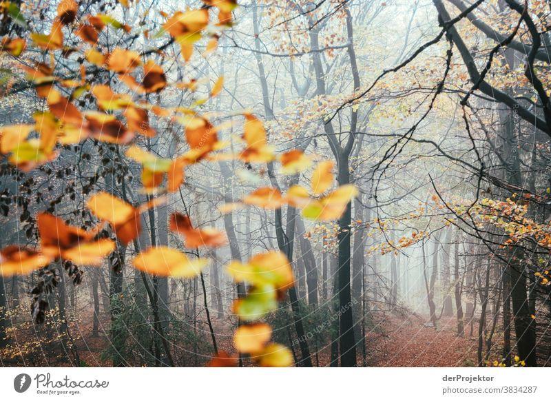 Bäume im Nebel im Deister Starke Tiefenschärfe Sonnenstrahlen Sonnenlicht Kontrast Schatten Tag Licht Textfreiraum unten Textfreiraum links Textfreiraum rechts