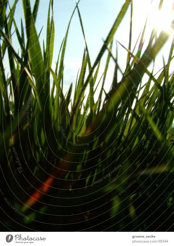 Wiese hautnah Sonne Gras Rasen Halm