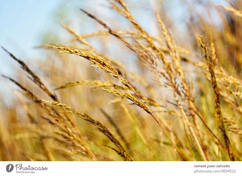 braune Blütenpflanze in der Natur im Herbst Blume Pflanze trocknen Garten geblümt Flora Schönheit Zerbrechlichkeit Hintergrund natürlich Feld Gras fallen Saison