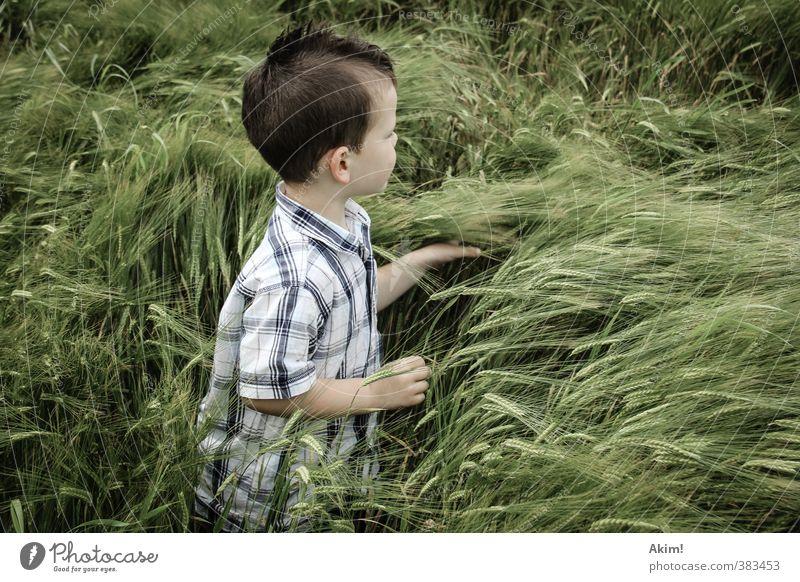 Der Fänger im Roggen III Kind Natur grün Sommer Einsamkeit Landschaft Umwelt Wiese Spielen Junge maskulin Feld Kindheit Abenteuer berühren Neugier