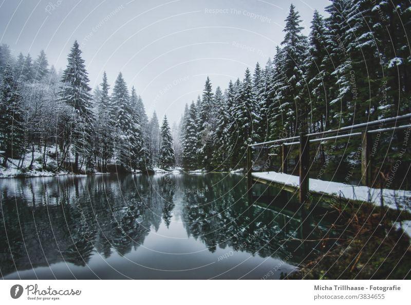 Waldsee im Winter Pfanntalsteich Oberhof Thüringen Thüringer Wald See Wasser Schnee Steg Bäume Geländer Spiegelungen Reflexion & Spiegelung Natur Landschaft