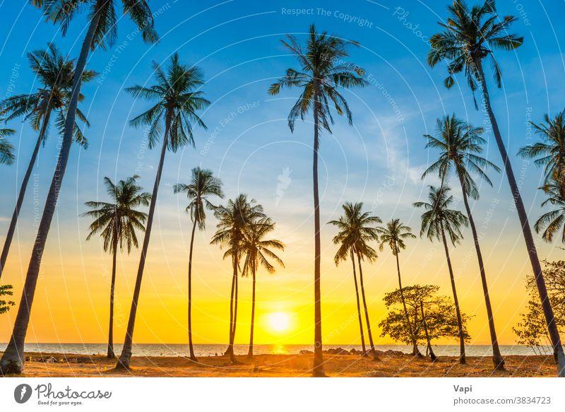 Sonnenuntergang mit Palmen am Strand Handfläche Baum Landschaft MEER Insel Meer tropisch reisen Sommer Himmel schön Silhouette Natur Kokosnuss Hintergrund