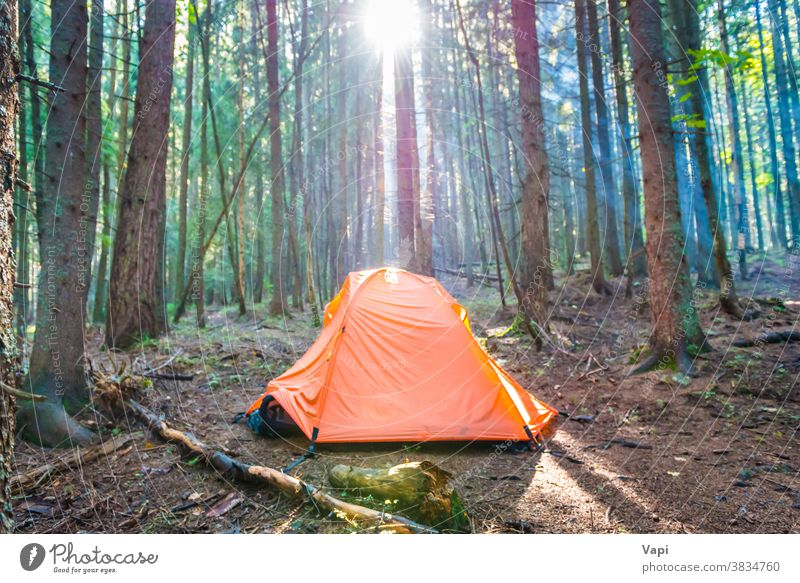 Orangefarbenes Zelt im grünen Wald Baum Sonnenuntergang Natur Campingplatz Sonnenaufgang Kofferraum orange Sonnenstrahlen Kiefer schön Hintergrund Sommer Park
