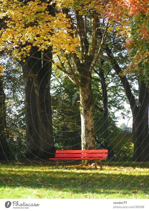 Rote Bank Baum Blatt Landschaft Graffiti Rasen