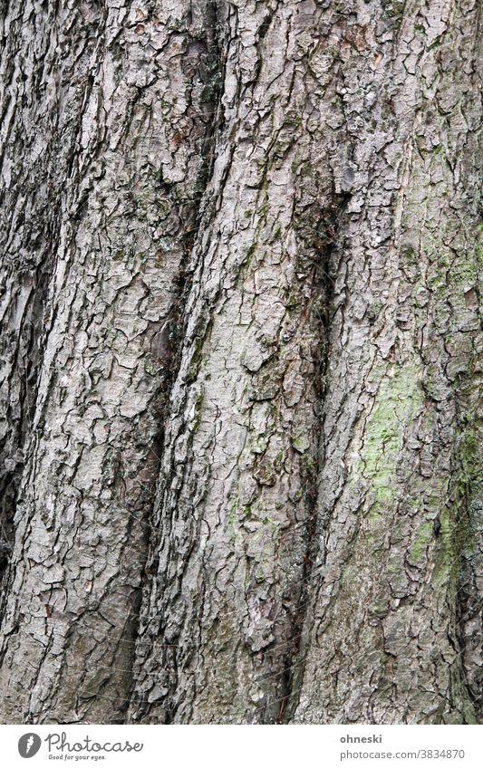 Baumstamm Rinde Strukturen & Formen Waldsterben Holz Forstwirtschaft Umwelt Natur