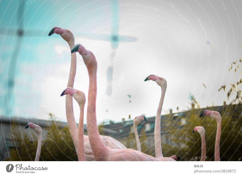 Kommt, lasst uns um die Häuser ziehn. Flamingo Vogel Schwarm Gruppe Gruppenzwang Vögel rosa Tier tiere Tiergruppe tierwelt Wildtier Natur Tierwelt gefangen