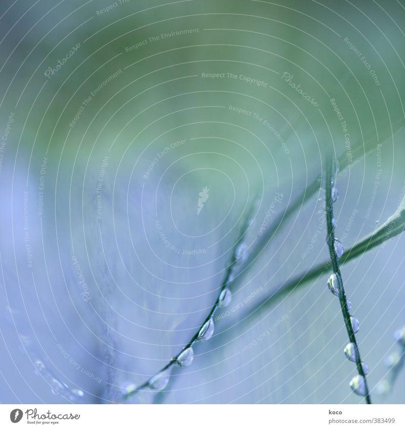 precious. Natur blau grün schön Wasser Sommer Pflanze Blatt kalt Gras Frühling natürlich außergewöhnlich Linie Luft glänzend