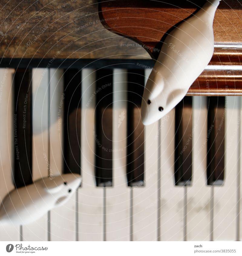 Künstler und Auditorium Maus Mäuse Schädlinge Schädlingsbekämpfung Süßwaren Süßigkeiten Gummitier Musiker Kunst musikalisch Klavier Pianist piano
