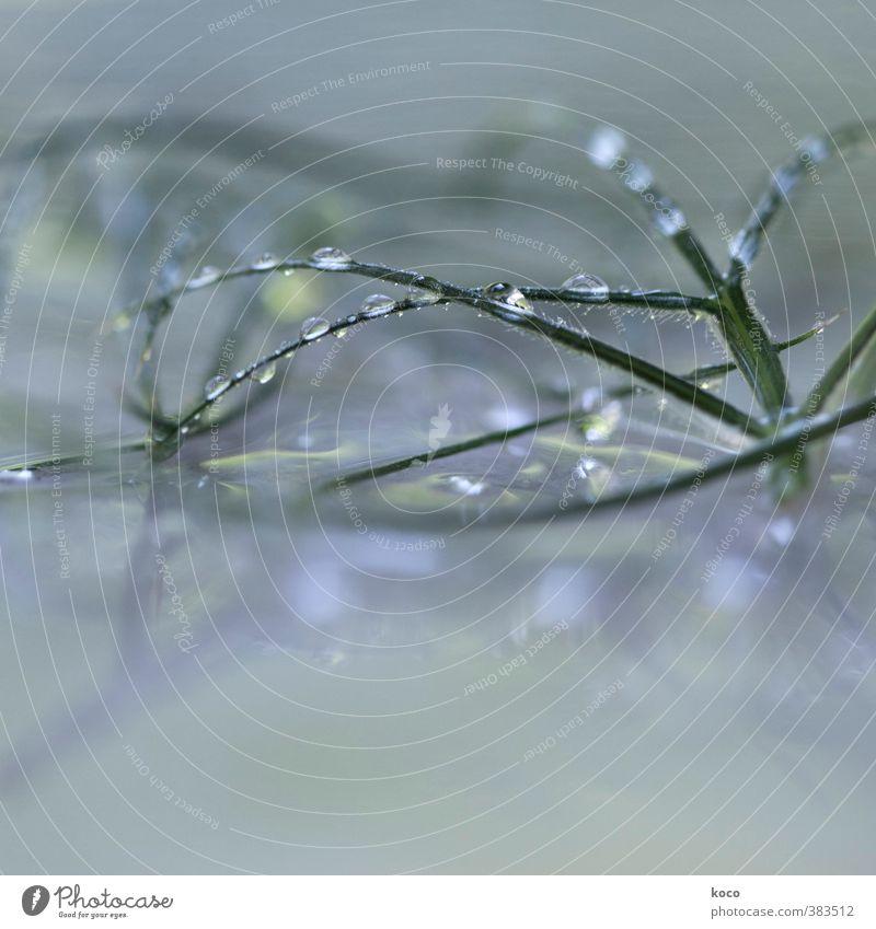 JEWELS Natur Sonnenlicht Frühling Sommer Pflanze Gras Glas Wasser Linie Netzwerk Tropfen berühren glänzend weinen einfach Flüssigkeit frisch schön nass