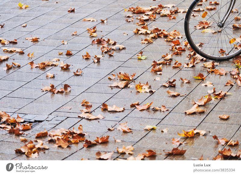 Vorderrad eines Fahrrads mit Herbstlaub Pflaster Pflastersteine grau braun trist regnerisch regnerisches Wetter orange Außenaufnahme Menschenleer Blatt Tag