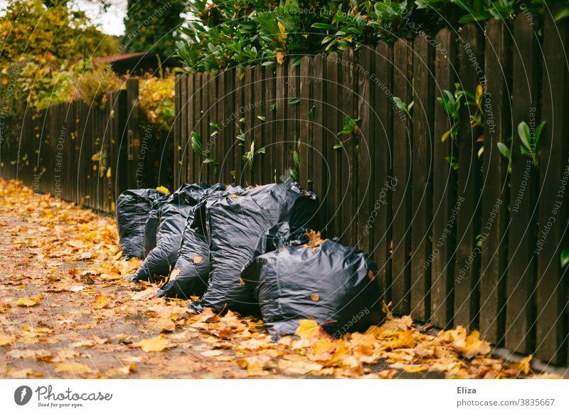Müllsäcke voller Laub auf dem Gehweg vor einem Zaun Gartenarbeit Herbst Laubrechen Blätter Herbstlaub Säcke Entsorgung
