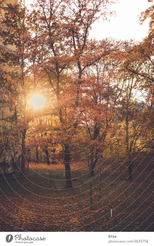 Bäume mit buntem Laub in der Herbstsonne Sonne Blätter Herbstlaub Herbstfärbung Sonnenlicht Wald herbstlich Natur