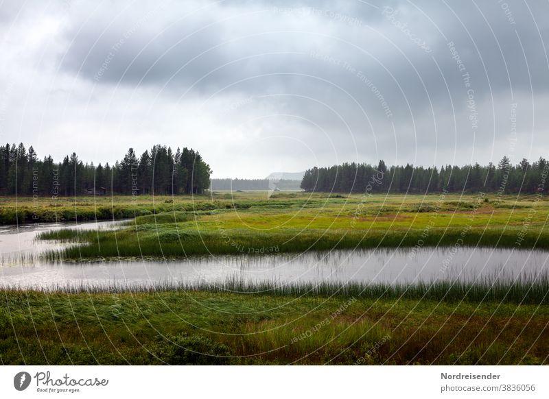 Moorlandschaft im Norden von Schweden Weitwinkel Abend Textfreiraum oben Menschenleer Außenaufnahme Traurigkeit Farbfoto Endzeitstimmung bizarr Einsamkeit nass