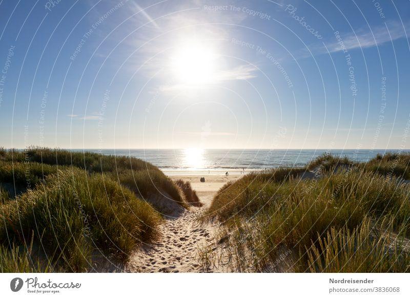 Weg durch die Dünen mit Blick auf den Strand der Nordsee ostsee nordsee meer wasser strand düne autostrand gegenlicht gras dünengras reflexion spiegelung