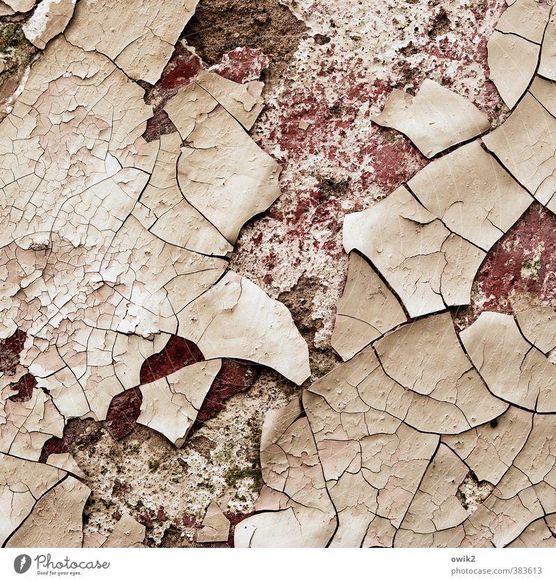 Unter der Haut alt Wand Senior Farbstoff Mauer Fassade kaputt Vergänglichkeit Wandel & Veränderung Ziel Spuren verfallen Teile u. Stücke Verfall Riss trashig