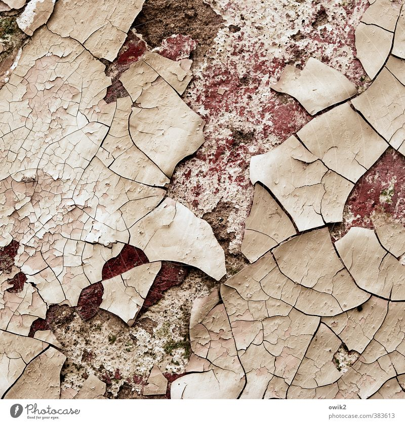 Unter der Haut Mauer Wand Fassade dehydrieren alt trashig Senior Verfall Vergänglichkeit Wandel & Veränderung Zerstörung Ziel Farbstoff Riss desolat kaputt
