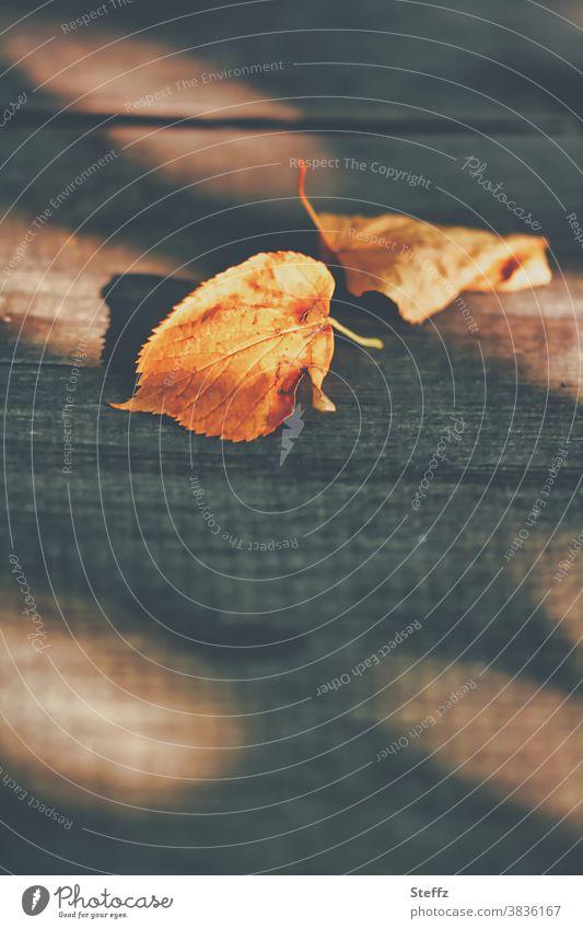 November auf dem Gartentisch Sinn Holztisch Holzbrett Herbstblätter Herbsttag Herbstlicht Melancholie melancholisch Nostalgie Licht und Schatten warme Farben