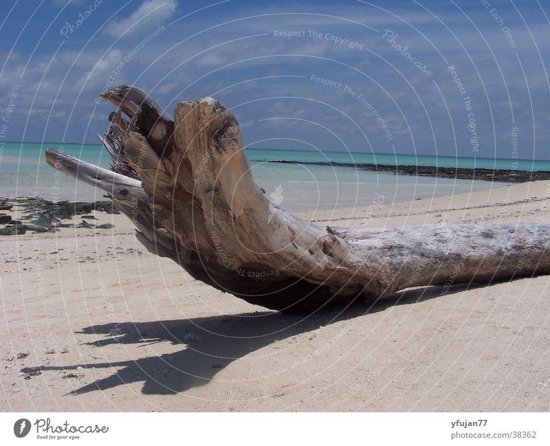 Qurimbas Himmel Baum Meer Strand Ferien & Urlaub & Reisen Zufriedenheit Insel Mosambik