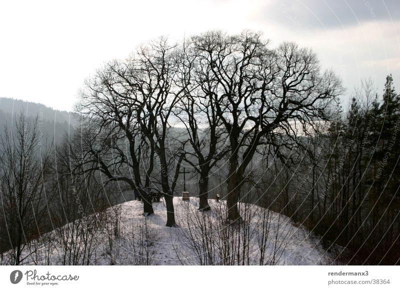 Winterberg Baum Winter Schnee Berge u. Gebirge Holz Hügel