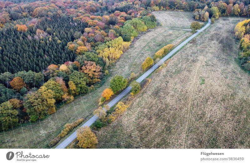Herbstmalerei herbstlich Herbstlaub Herbstfärbung Herbstbeginn Herbstwald Herbstwetter Herbstlandschaft Herbstgefühle Herbstwind Straße Mecklenburg-Vorpommern