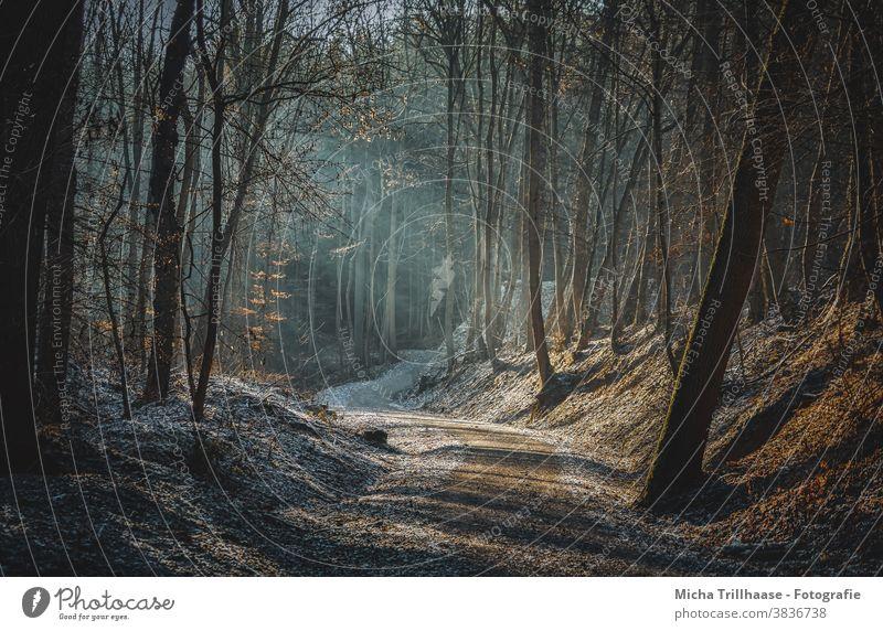 Sonnenstrahlen im Wald Lichterscheinung Baum Herbst Winter Schönes Wetter Sonnenlicht Natur Landschaft wandern Erholung natürlich Lichtschein Raureif Idylle