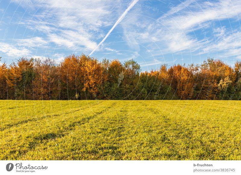 Weide und Wald im Herbst Herbstfarben Jahreszeit Wiese grün Gras Natur Himmel Landschaft Baum Wolken Herbstlicht Herbstlaub bunt Feld Herbsttag Herbstfärbung