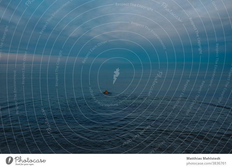 Hund schwimmt hinaus auf das Meer blau Himmel Wolkenloser Himmel Außenaufnahme Farbfoto Menschenleer Tag Textfreiraum oben Natur Umwelt Schönes Wetter
