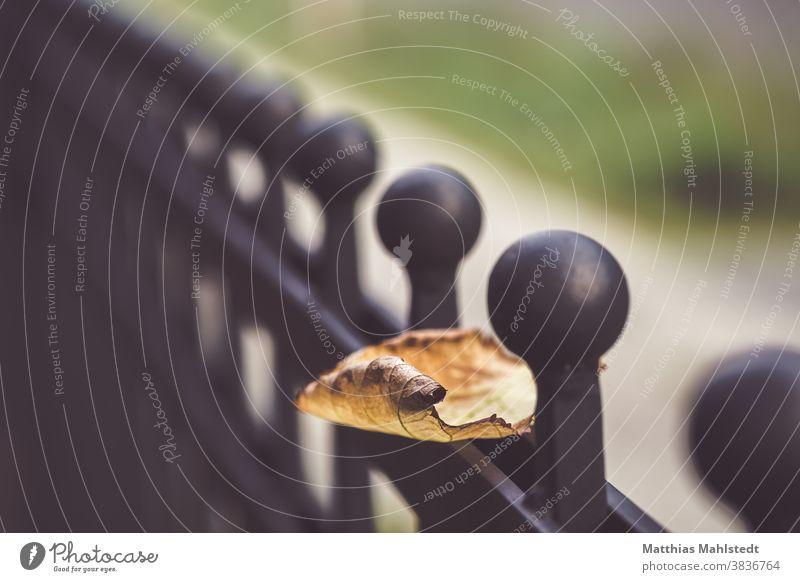 Herbstblatt auf Metallzaun Blatt Herbstlaub herbstlich Herbstfärbung Farbfoto Menschenleer Natur Außenaufnahme Schwache Tiefenschärfe Nahaufnahme Herbstbeginn