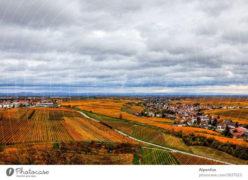 Herbst in der Pfalz Jahreszeiten Oktober Klima mehrfarbig Herbstbeginn Natur Herbstlaub Blatt Herbstfärbung herbstlich Umwelt Tag Licht Außenaufnahme