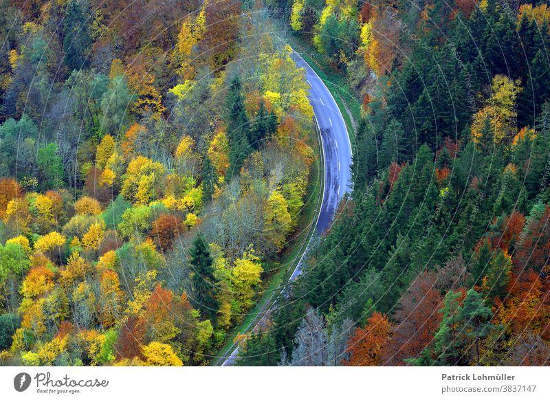 Herbstschleife herbst herbststimmung bäume wald straße von oben aussicht ausblick schneise oberes donautal reisen tourismus baden-württemberg deutschland europa