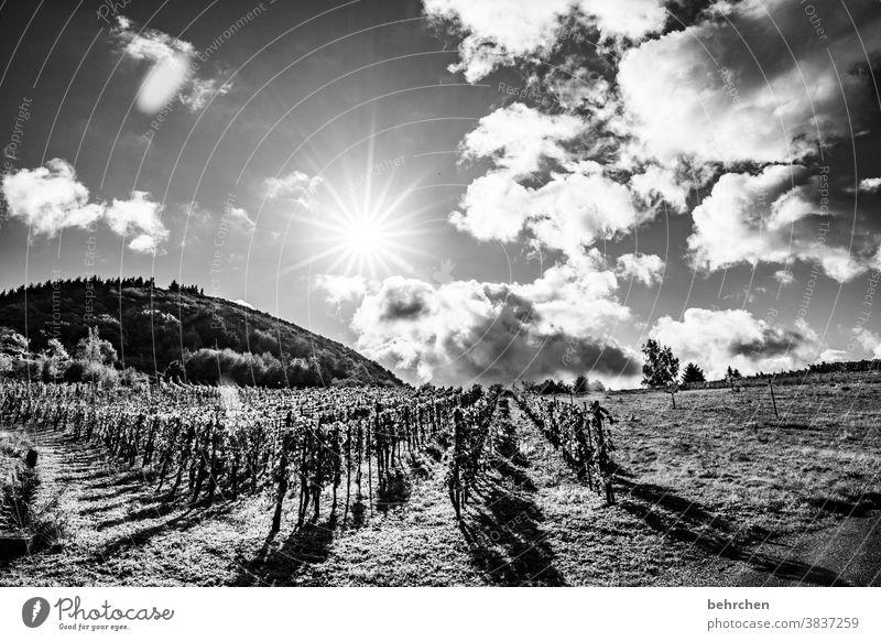 auf regen folgt sonnenschein Wege & Pfade Moselsteig Mosel (Weinbaugebiet) Rheinland-Pfalz Moseltal Hunsrück Sonnenlicht Ruhe Idylle Fluss Flussufer Weinstock