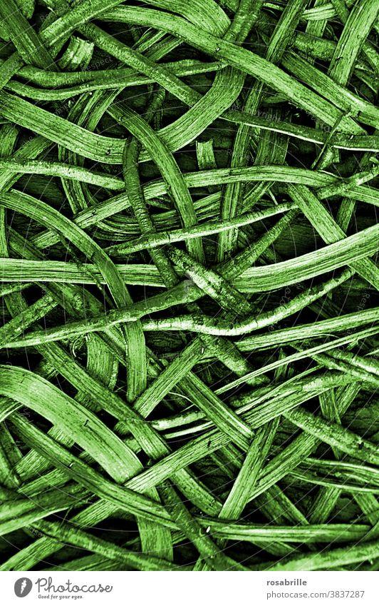 back to the roots | Muster aus Wurzeln und Holz Hintergrund natürlich Natur Geflecht verschlungen verschlingen Schlinge wachsen Konzept konzeptionell abstrakt