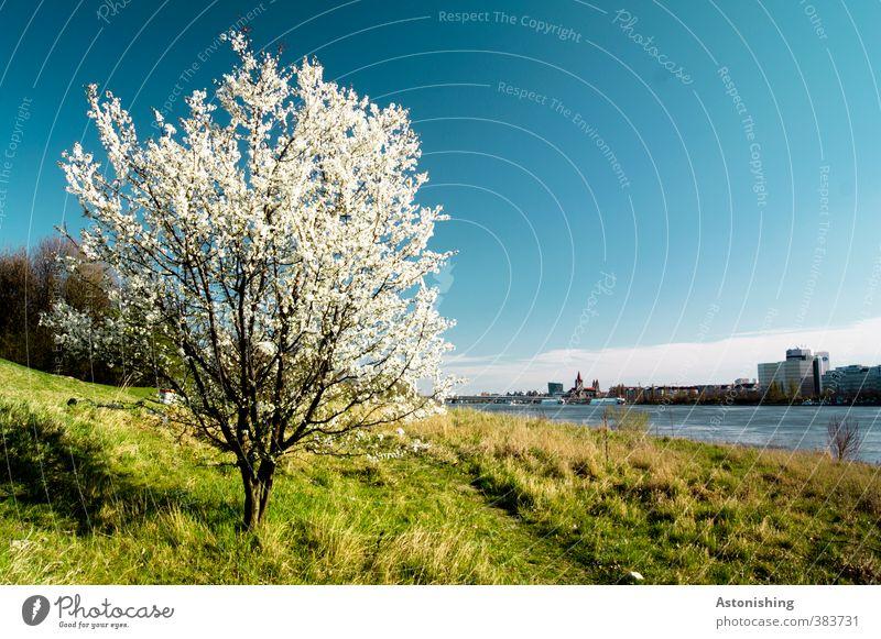 Frühling Umwelt Natur Landschaft Pflanze Himmel Wolken Horizont Wetter Schönes Wetter Wärme Baum Blume Gras Sträucher Blatt Blüte Park Wiese Wald Hügel