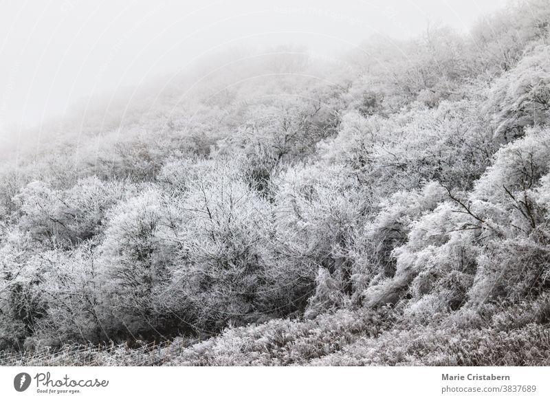 Ätherische Szene eines mit Winterfrost bedeckten Waldes ätherisch Winterlandschaft Klima winterlich frigide saisonbedingt schneebedeckte Bäume märchenhaft