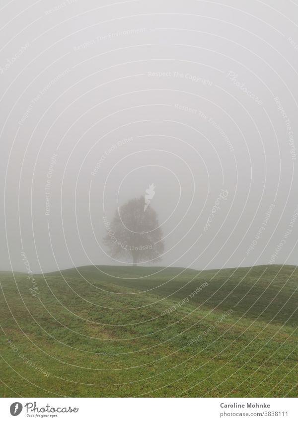 Baum im Nebel grün aussenaufnahme Natur Landschaft Farbfoto Umwelt Pflanze Herbst Licht Schatten Himmel Wiese Feld Tag Gras Menschenleer Morgen Außenaufnahme