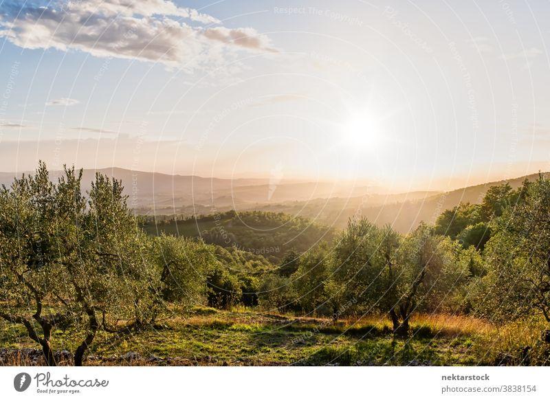 Ländliche Landschaft in der Toskana im Sommer Sonne Himmel Wolkenlandschaft Horizont Italien Ernte ländlich Cloud Laubwerk pflanzlich toskanisch Europa Tag