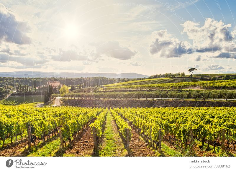 Weinberge und Sommerlandschaft in der Toskana Himmel Cloud Wolkenlandschaft idyllisch Idylle pflanzlich grün Inszenierung Ackerbau Nahrungsmittelproduktion