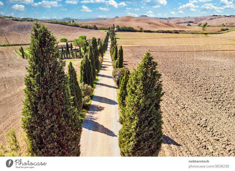 Landstraße in Siena Toskana mit toskanischen Zypressen Straße Baum Italien Ackerbau Feld ländlich Landschaft Ackerland weniger befahrene Straße sonnig Sommer