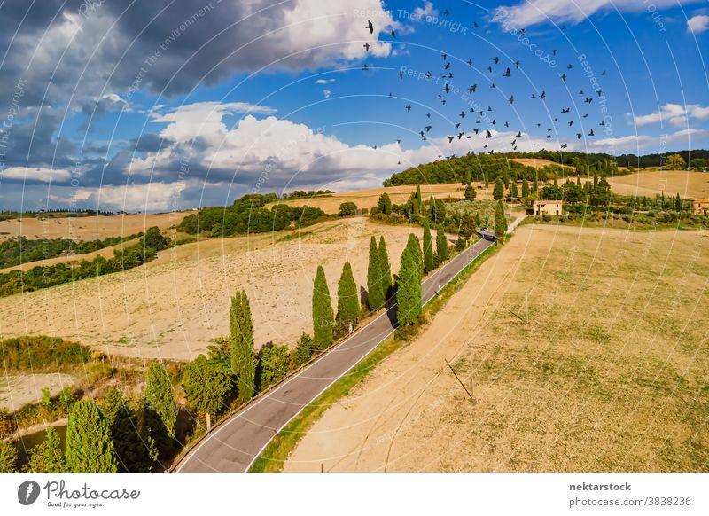 Felder und Straße mit Vogelschwarm am Sommerhimmel in der Toskana Italien Ackerbau Schwarm ländlich Ackerland Himmel gutes Wetter Landschaft