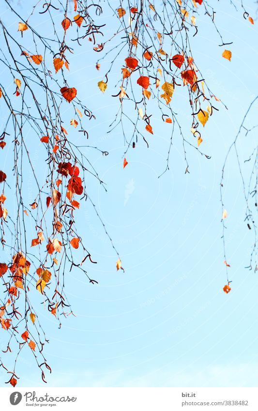 Birkenbaumblätter hängen, vor dem Haus am See... Blätter Blätterdach Blatt blau Blauer Himmel Herbst herbstlich Herbstlaub Herbstfärbung Herbstbeginn